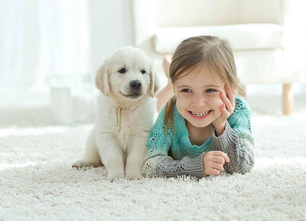 Removing Pet Stains Buckinghamshire